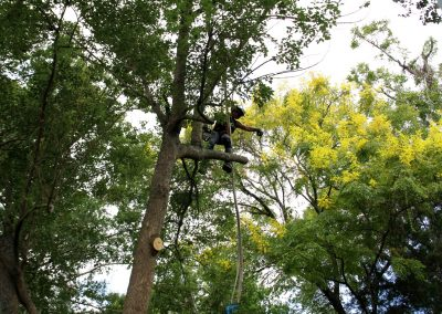 best cheap tree removal jacksonville florida