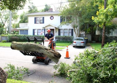 best tree removal service jacksonville florida