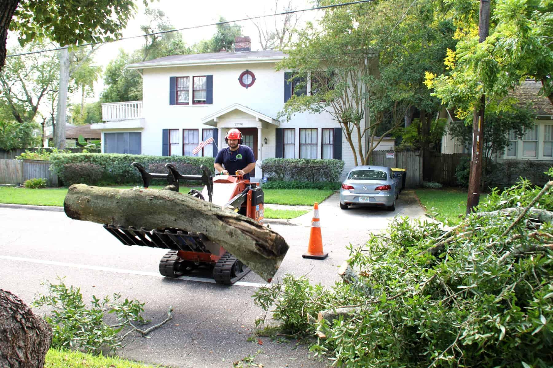 Genesis Tree Care Gallery Jacksonville Fl Call Us 904 878 0950