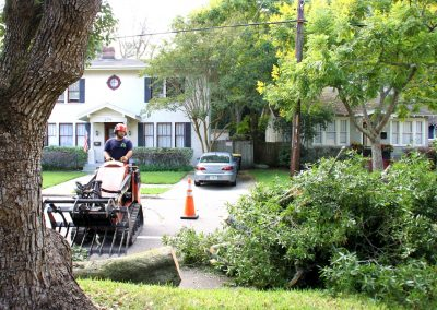 best tree service jacksonville florida