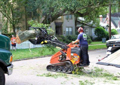 best tree trimming service jacksonville fl