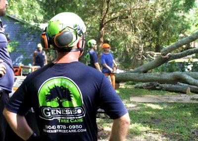 cheap tree removal jacksonville fl