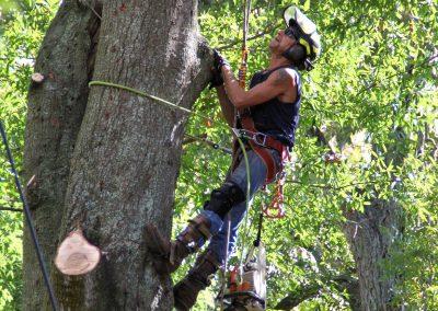 cheap tree removal jacksonville florida