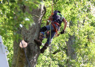 cheap tree removal service jacksonville florida