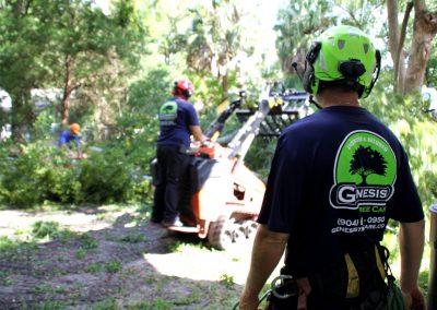 cheap tree service jacksonville florida