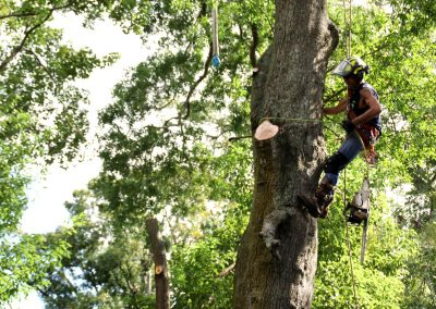 cheap tree trimming jacksonville florida