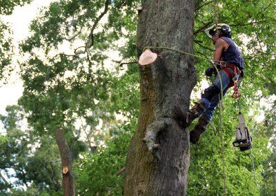 cheap tree trimming service jacksonville florida
