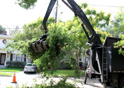 top tree removal service jacksonville florida