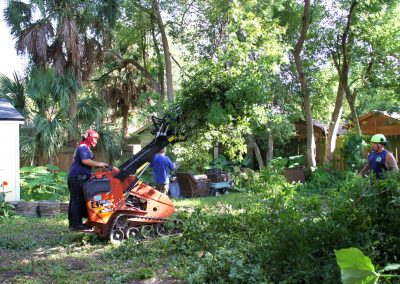 tree removal jacksonville florida