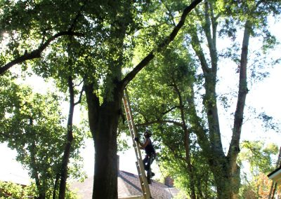 tree service jacksonville florida